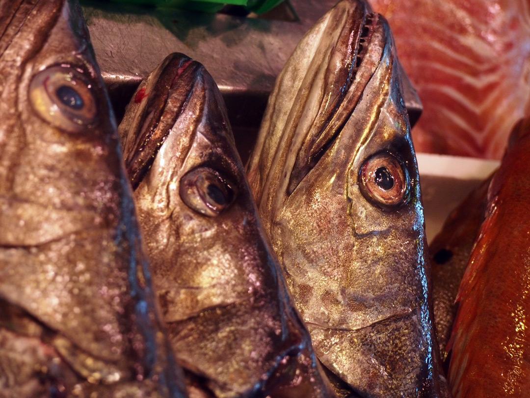 Vissen op de Albert Cuyp markt